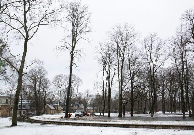 f81c2eeb5e0 W3 uudised - FOTOD | Kadrioru pargis alustati haigete puude langetamist