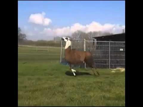 VIDEO: Mina, kui tööpäev läbi saab
