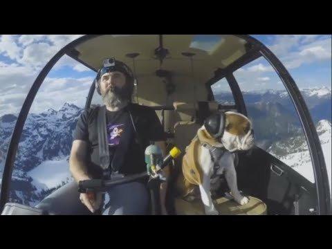 Internet kihab: See koer elab tõenäoliselt vingemat elu, kui sina