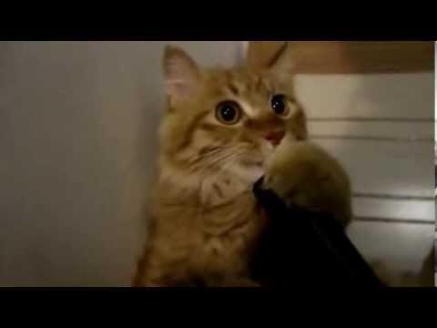 VIDEO | Kui keelt tolmuimejasse ajav kass ei aja sind naerma, siis mis üldse seda teha suudaks?