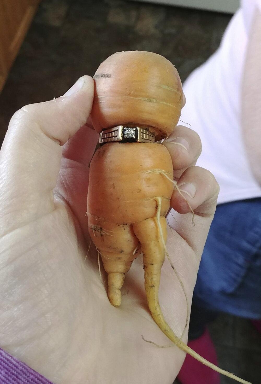 Потерянное обручальное кольцо нашлось на морковке 13 лет спустя рекомендации