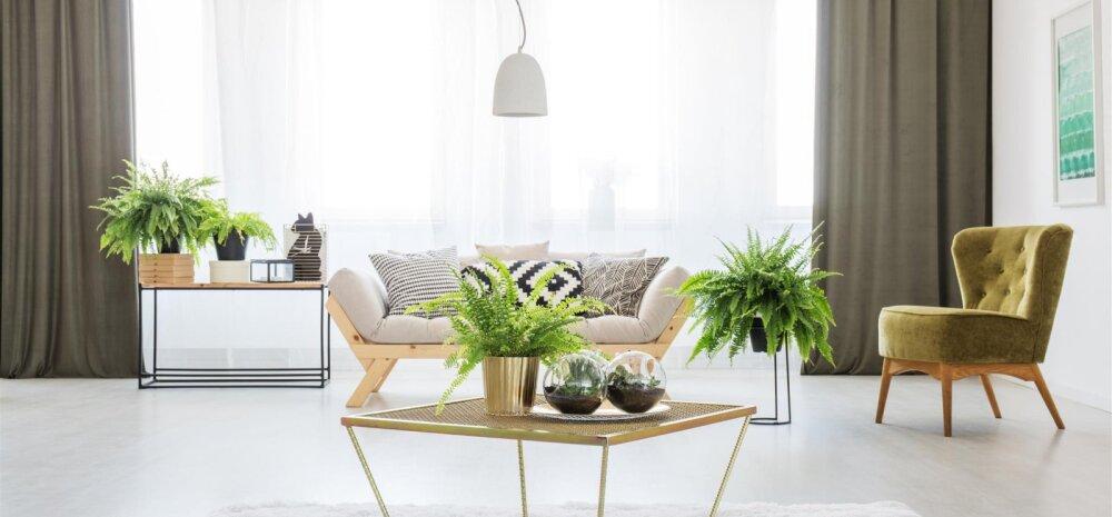 TOP 7 │ Hea energiaga toataimed, mis võiksid kasvada igas kodus