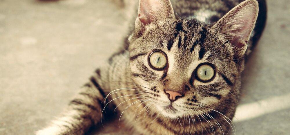 15 fakti: kummalisi kassidega seotud fakte, millest sa ilmselt varem kuulnudki ei ole