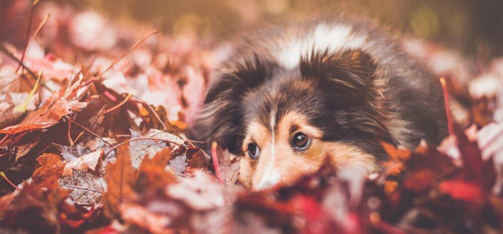 Olulised nipid | milliseid muutuseid toob sügis sinu lemmiklooma ellu?
