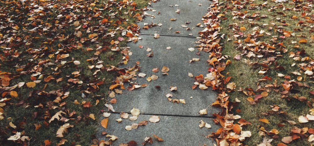 Viis võimalust, kuidas mahalangenud lehed oma aia heaks ära kasutada