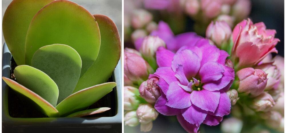Стащить веточку: пять растений, которые легко можно вырастить дома
