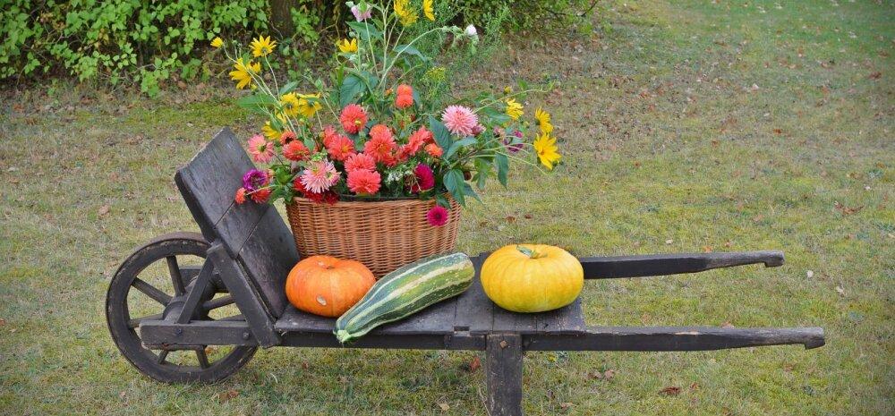 НА ЗАМЕТКУ | Октябрь. Уход за газоном, кустарники, работы в теплице и огороде