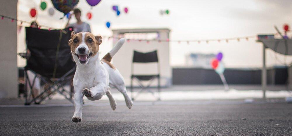 ÜRITUS | Tallinna loomade varjupaik kutsub uhkele sünnipäevapeole!