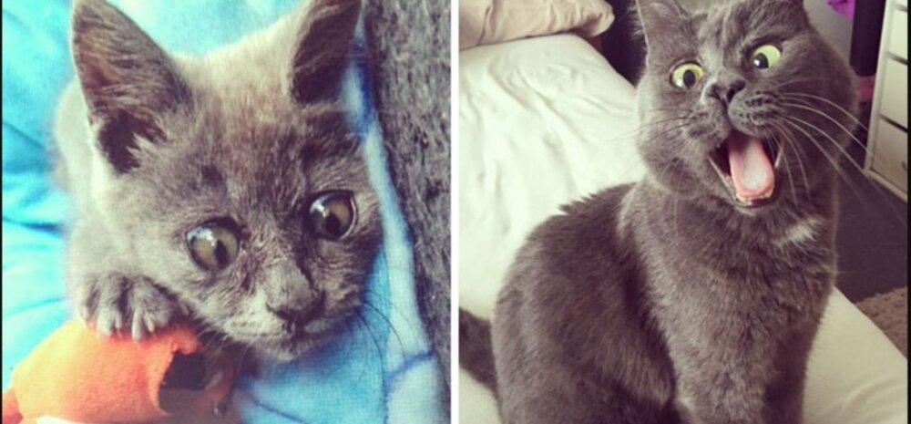 Fantastiline GALERII | 20 fotot kassidest näitavad, millisteks suursugusteks kaunitarideks väikesed kassipojad sirgunud on