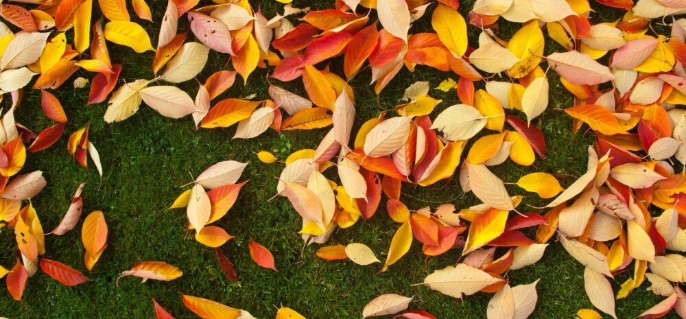 Kasulik nipp — miks ei tasuks lehtede koristamisega kiirustada?