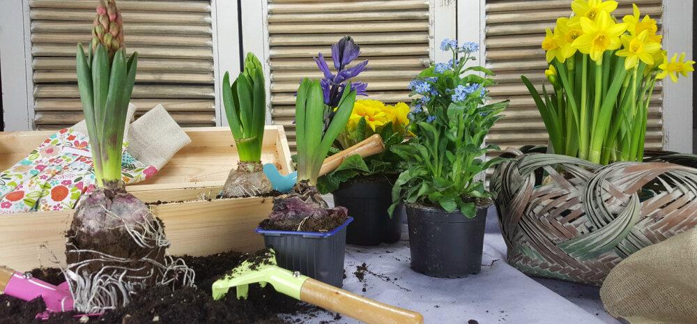 Millised aiatoimetused tuleks ära teha maikuus