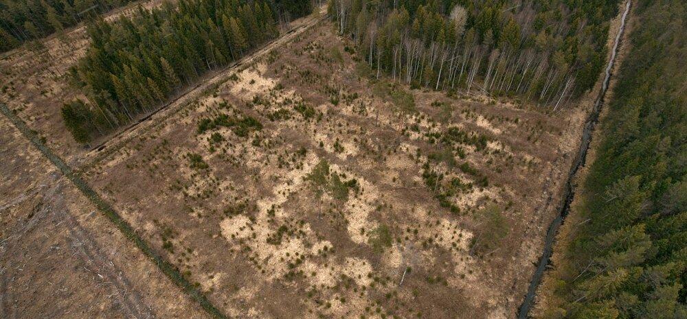 PUUST JA PUNASEKS | RMK ekspert räägib, mis riigimetsades tegelikult toimub ja mida riik oma metsa kohta teab