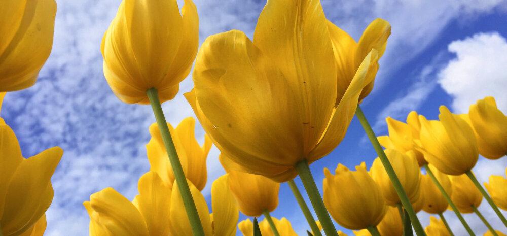 FOTOVÕISTLUS: Saada pilt oma aias või rõdukastis õitsevatest lilledest ja võida äge auhind!