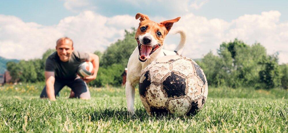 Õiglus jalule: mis sai jalgpalli MM-i raames toimunud koerte massilisest tapmisest?