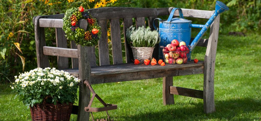 HEA TEADA | Millised aiatööd tuleb ette võtta augustis