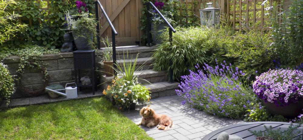 FOTOD │ Väike aed võib pakkuda mõnusat äraolemist — vaata ideid!