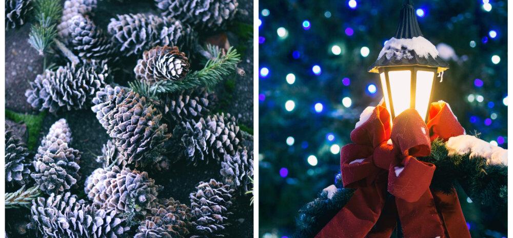 Aeda ei saa unustada jõulukuulgi — aiatoimetused detsembris