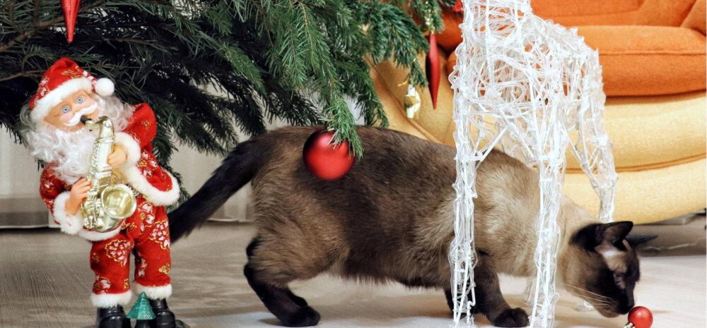 """""""Pühad minu kodus 2018""""   """"Kohustuslik"""" jõulupuu ja muud loomad"""