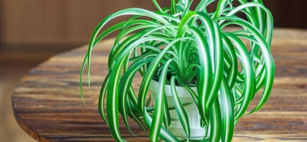 Подготовка к зиме: 8 вещей, которые нужно сделать с комнатными растениями