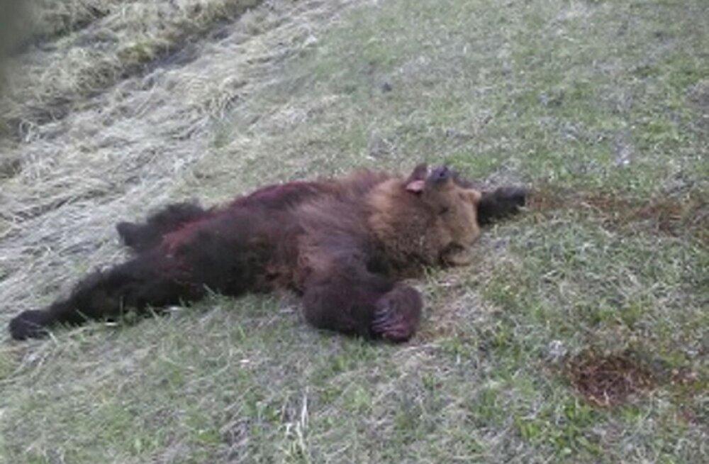 Harjumaal jäeti autolt löögi saanud isakaru teele surema