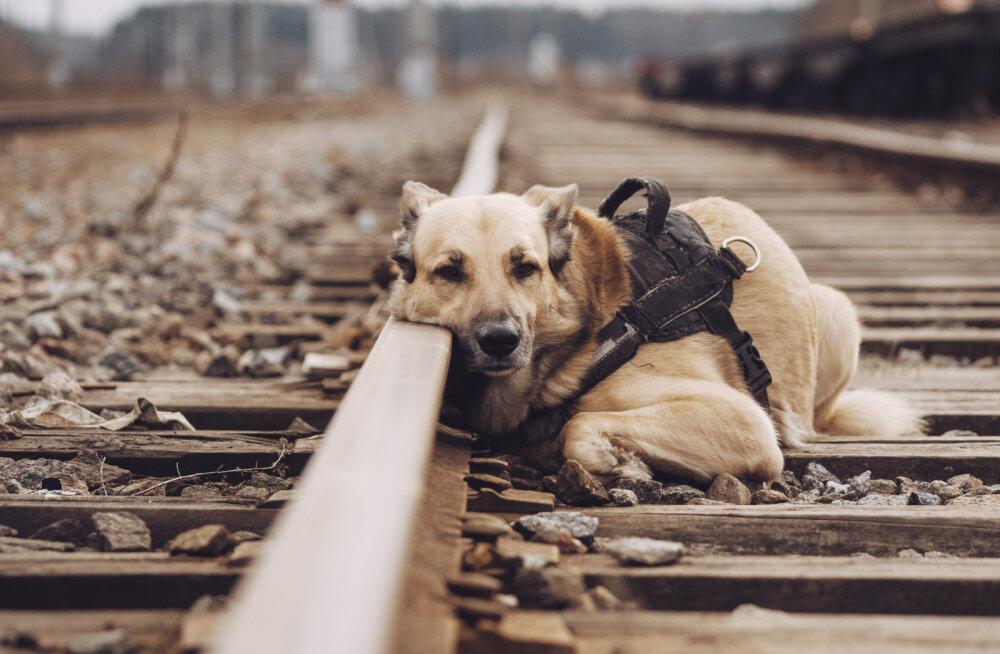 Kas lemmikloomad teavad ja tunnevad, kui omanik on suremas?