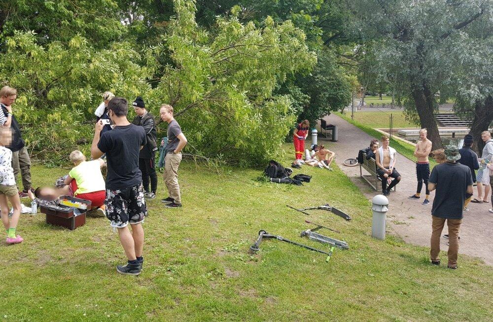 Puu kukkus noortele peale