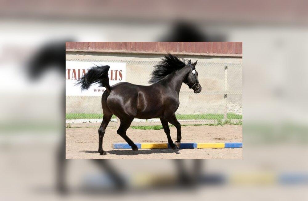 FOTOD: Nädalavahetusel toimus kaks hobuüritust