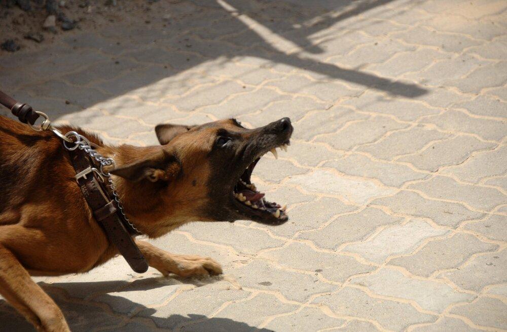 Agressiooni tüübid koerte seas: kas ja mida teha, kui lemmik on teiste koerte vastu agressiivne?