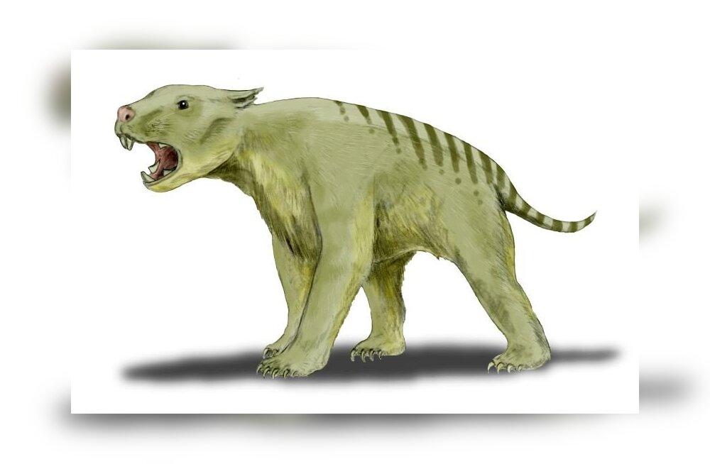 Milline oli kukkurlõvi - Austraalia kunagine suurim kiskja?