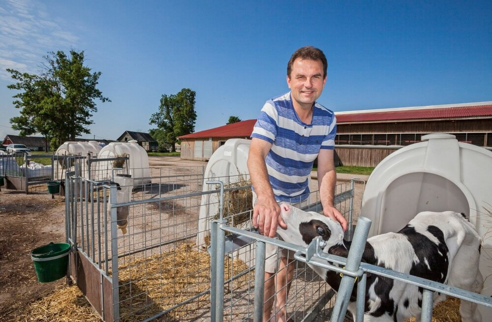 Soone Farmi omanik Andres Tamm tunnistas, et on pidanud Venemaa embargo tulemusel langenud piima hinna tõttu kulud üle vaatama ja karja vähendama.