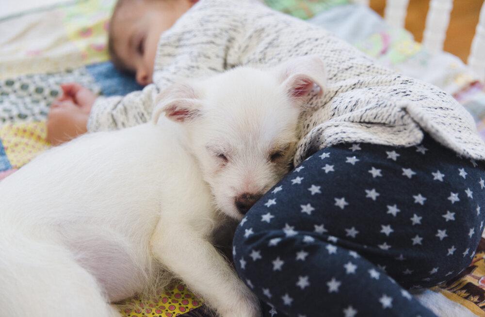 VEIDER RAHVUSTAVA | Itaallastele meeldib lemmikloomaga ühes voodis magada