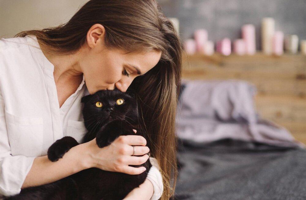 Täna on rahvusvaheline kasside päev!