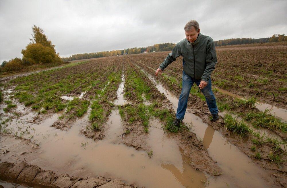"""""""Siin põllu otsas, mis vee sees on, ilmselt kartul juba mädaneb maa sees. Aga niipea põllule veel ei pääse,"""" uurib oma põllu seisukorda Tartumaa kartulikasvataja Priit Einola."""