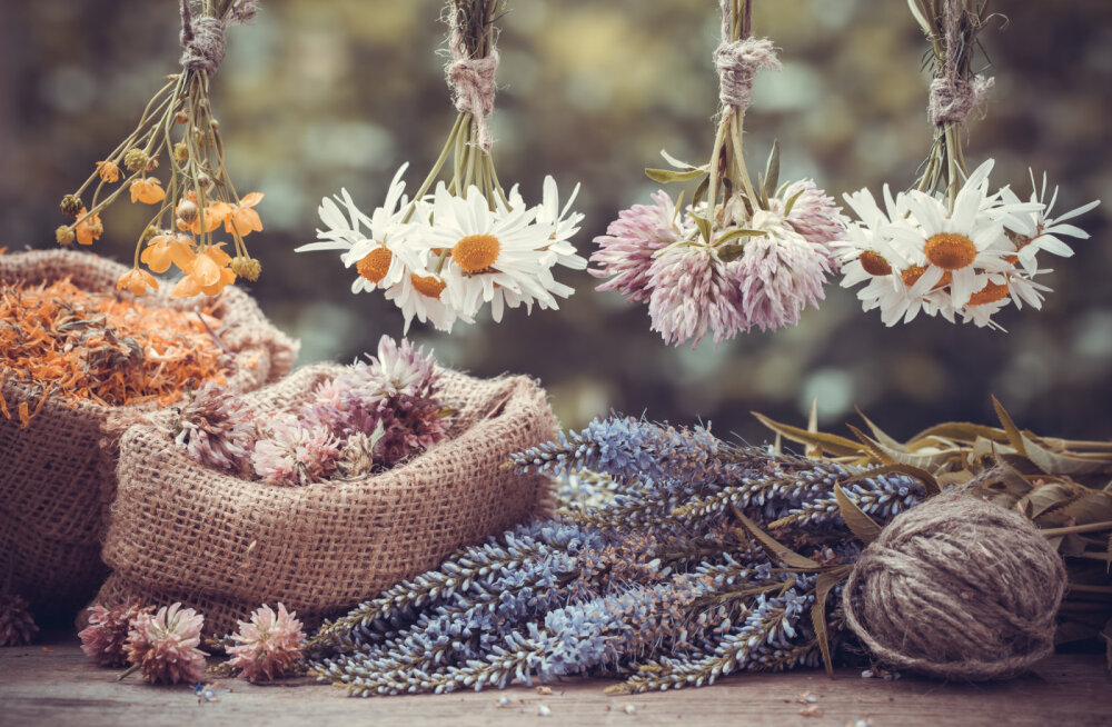 Tunne nõiataimi: millised taimed toovad õnne ja millistest tasub hoiduda?