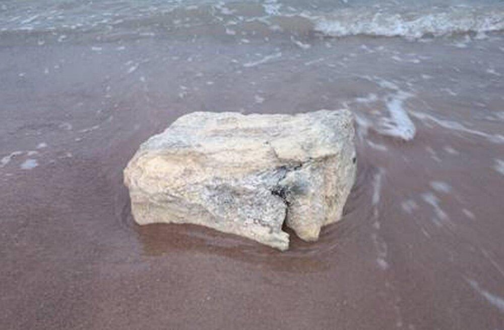 Meri uhtus Hiiumaa randa paarsada kilogrammi valkjaid kamakaid