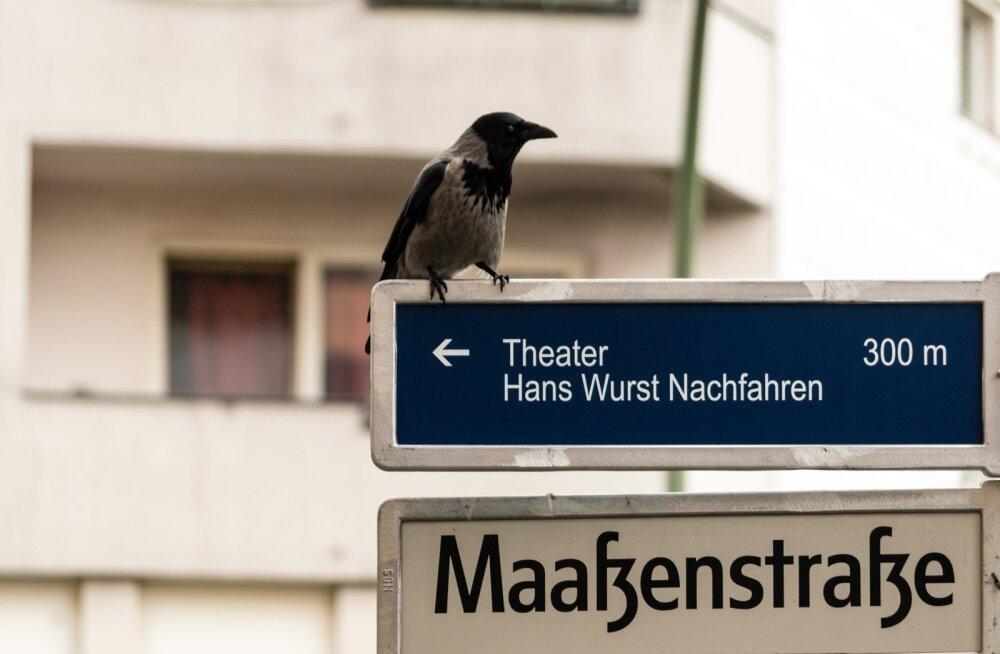 Suur loomaaed Berliin*