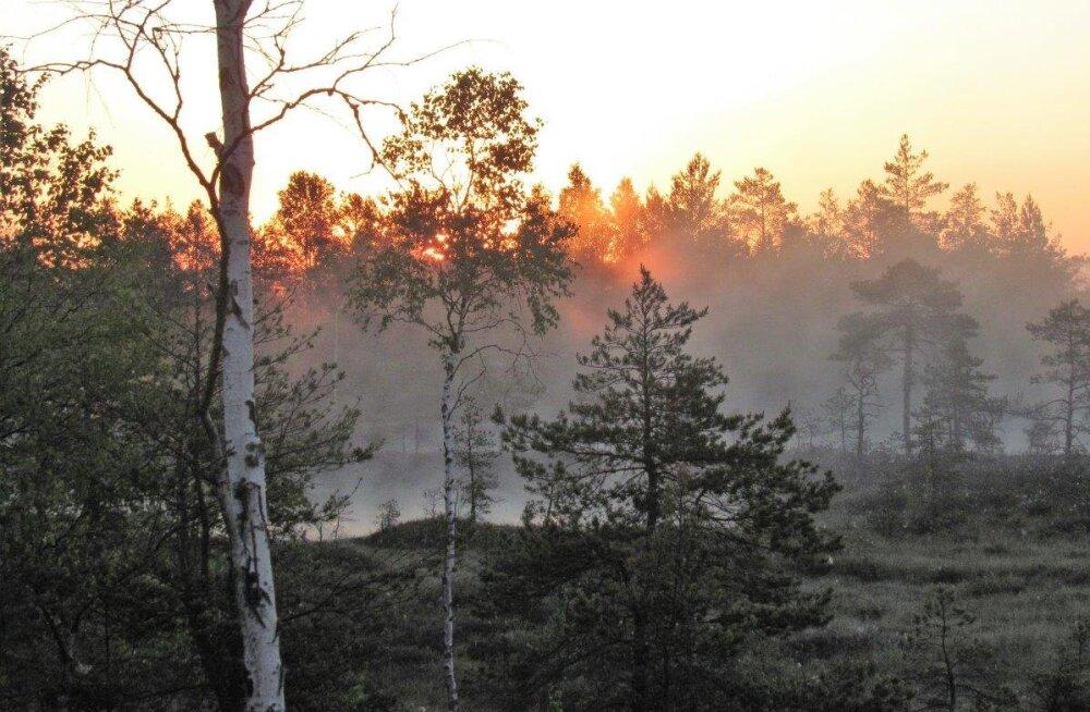 Leili metsalood | Päevatõus kui põletav leek