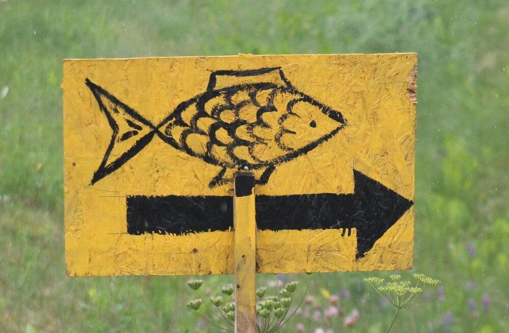 Kalapildid ehk naivismi tipptaiesed, Mustvee - Rannapungerja, Peipsi rand, Ida-Virumaa, Jõgevamaa