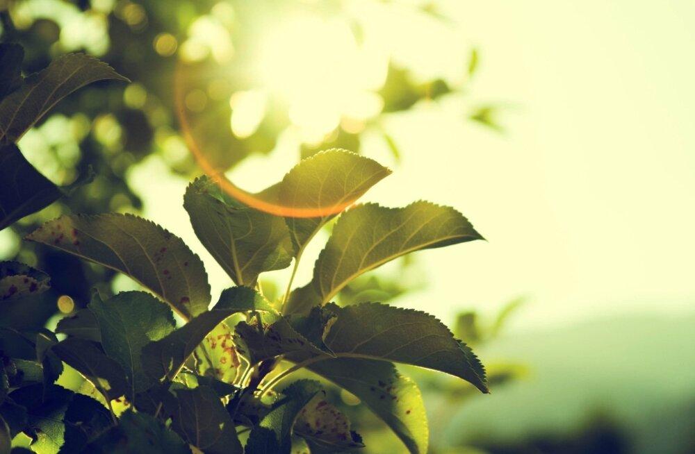 Nädala prognoos: hoovihmad peaksid taimedele kergendust tooma