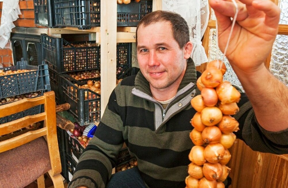 Konstantin Avvo tahab säilitada Peipsi sibula kasvatamise traditsioone.