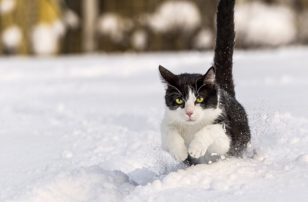 VIDEO   Kassid juba teavad, kuidas tuleb talve nautida ja värske lume sees pulli teha!