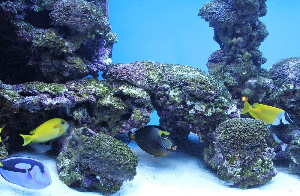 Sul on kodus kalad? 10 põhilist viga, mida akvaariumi omanikud teha võivad