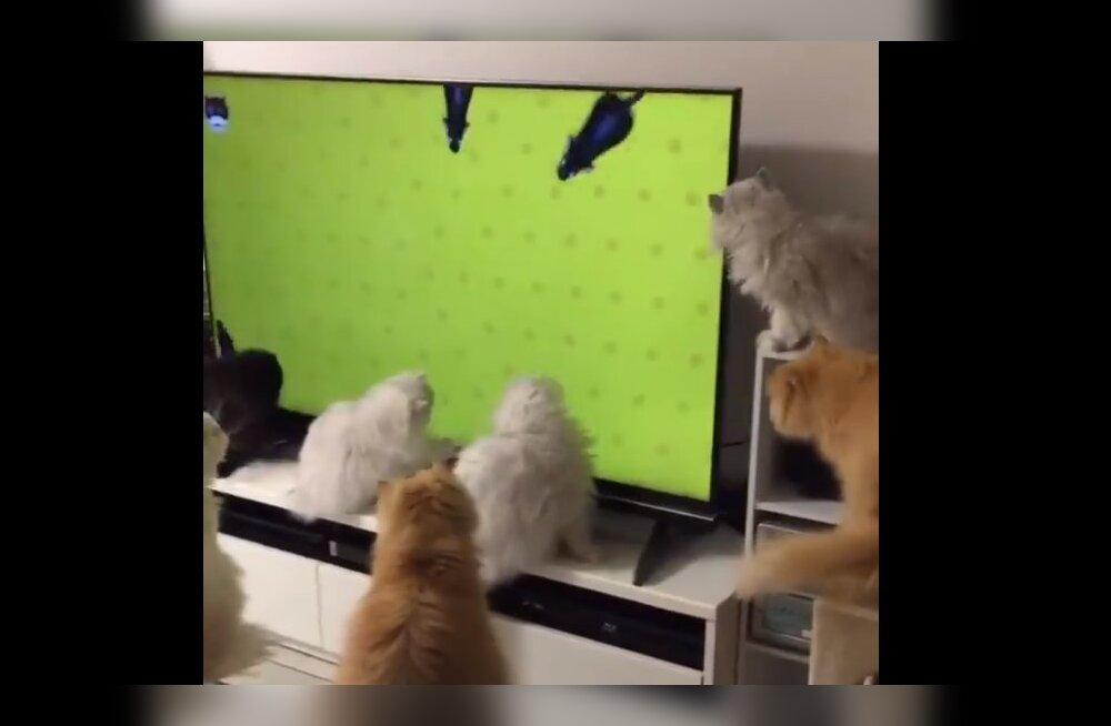 Humoorikas VIDEO   Tänapäeval leiab igaüks omale sobiva meelelahutuskanali!