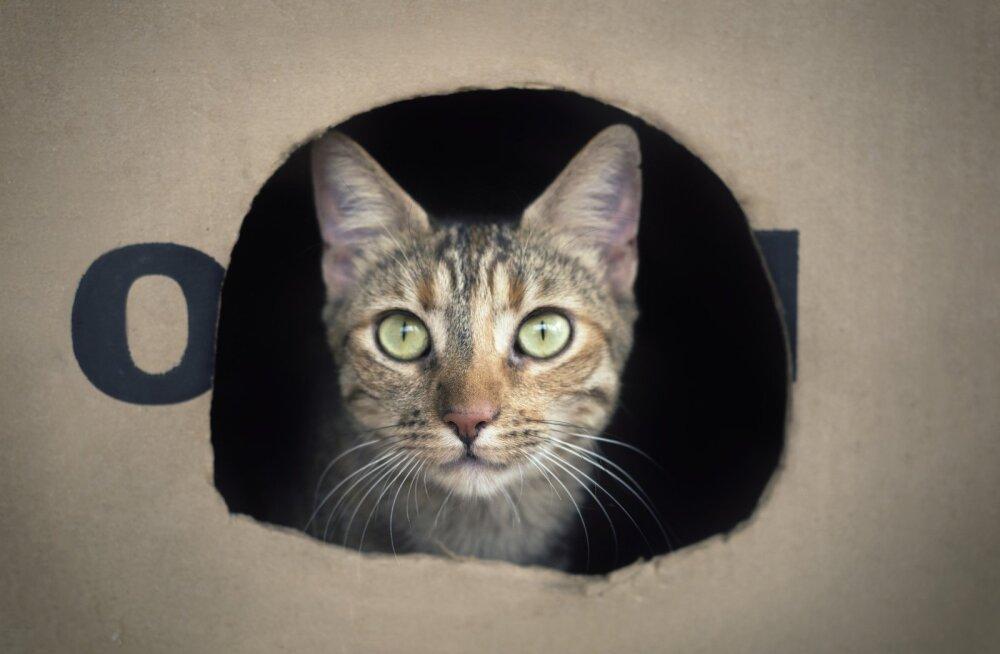 Mis värk kassidel nende pappkarpidega ikkagi on?