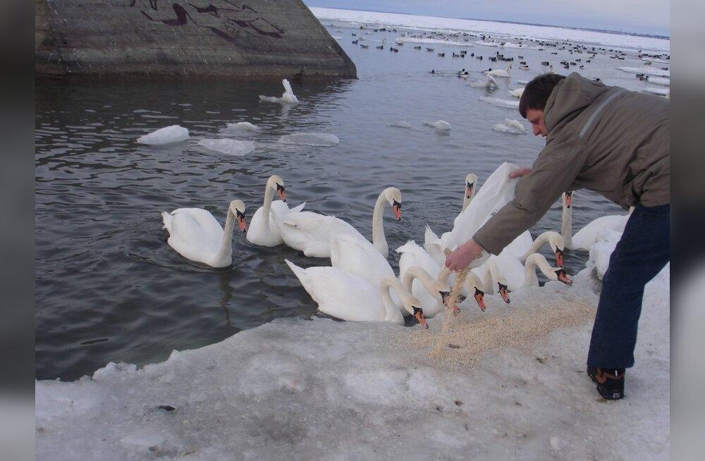 Heiki Valner: Me ainult ei või, vaid peame linde toitma!
