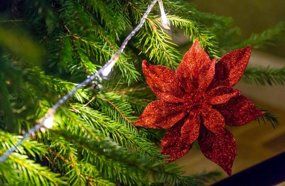 Jõuluküsitluste tulemused: õpitakse uusi luuletusi ja käiakse kirikus