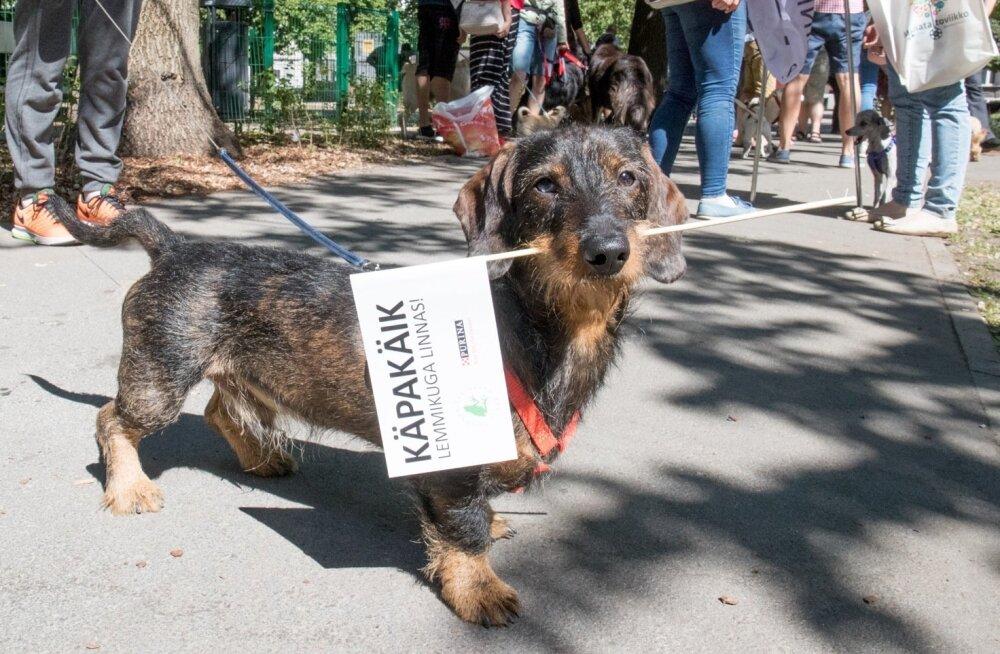 ÜRITUS | Lemmikloomaomanike seas populaarseks saanud Käpakäik tuleb taas!