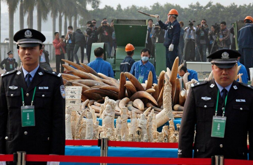 2014. aastal hävitasid Hiina võimud riigi lõunaosas kokku kuus tonni illegaalset vandlit, mille tolliametnikud olid kätte saanud.