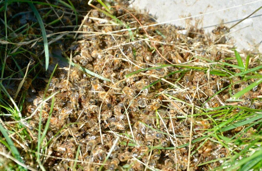 Suvel sai tuhandeid mesilasi Lääne-Virumaal hukka eeldatavasti taimekaitsetööde tõttu. See tõstis taas teravalt üles tarutoetuse ja kahjude kompenseerimise teema.