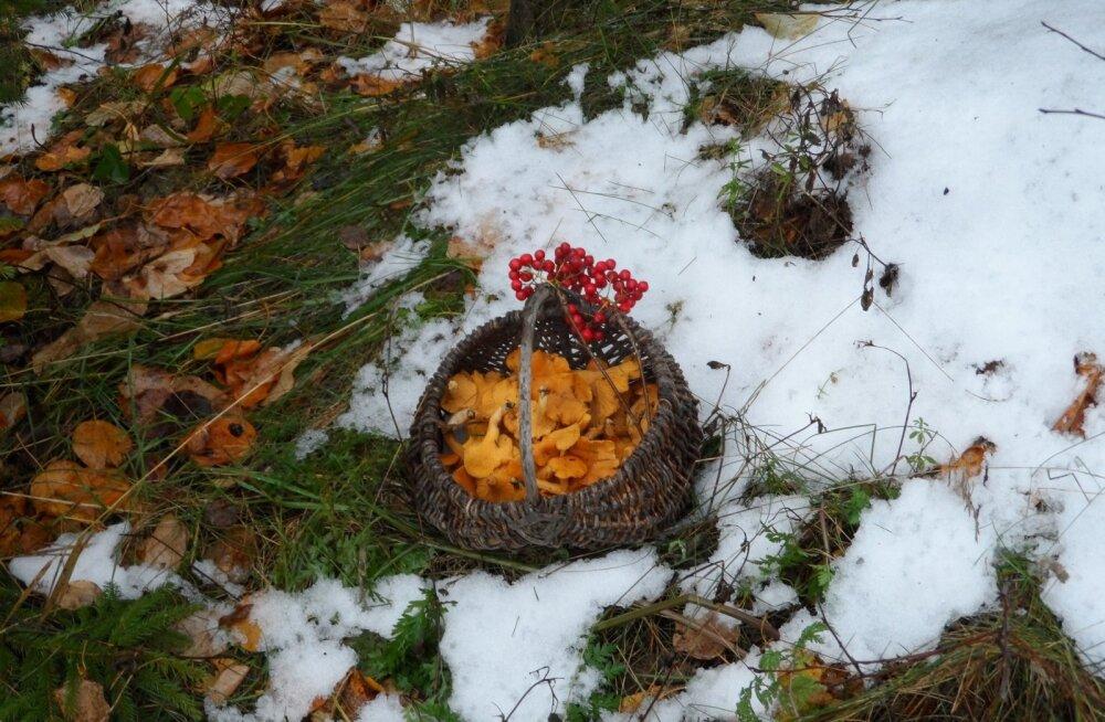 Talvine seenelkäik